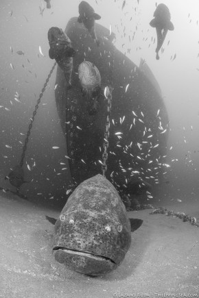 Up close to friend goliath grouper