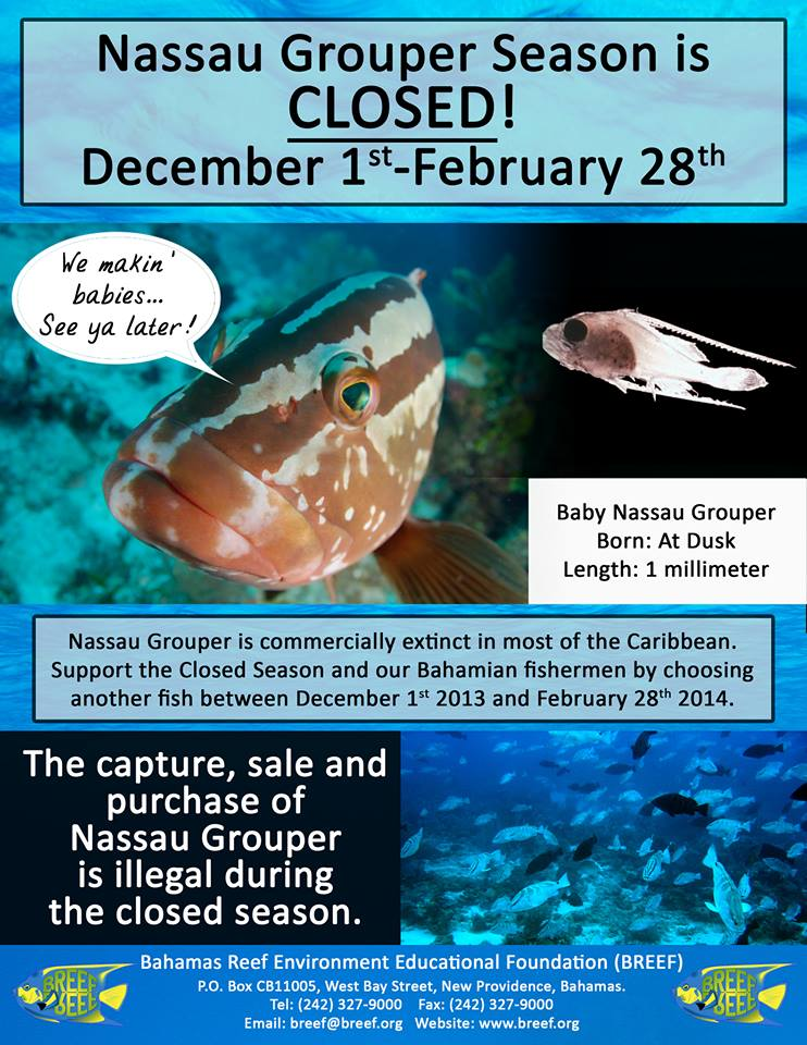 Nassau Grouper Season closed until Feb 28, 2014
