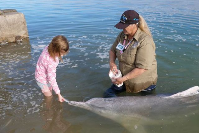 A child hand feeding a dolphin at Tin Can Bay