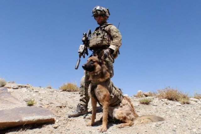 Kuga in the desert with his handler.
