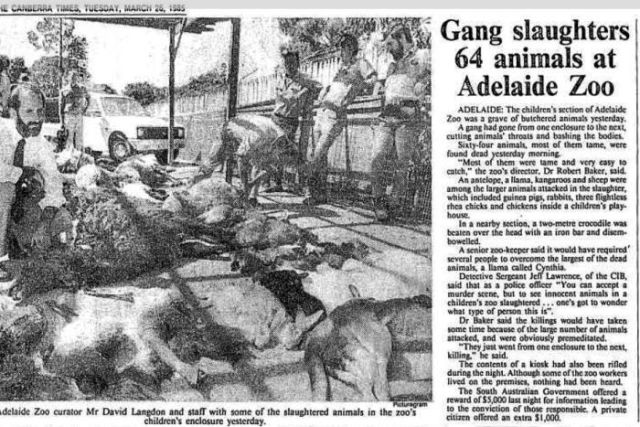 Canberra Times article of slaughtered animals