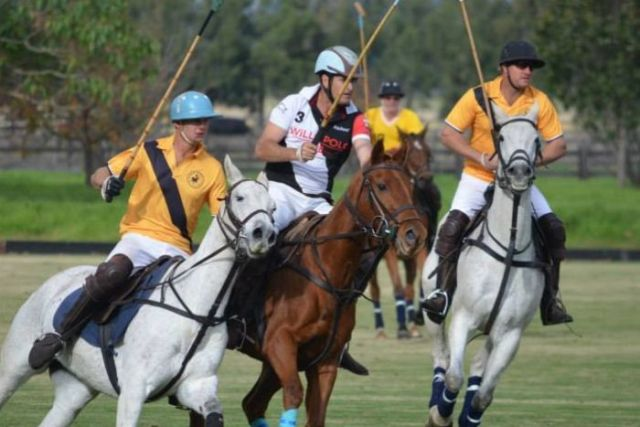 Polo competition, featuring riders and horses from Willo Polo.