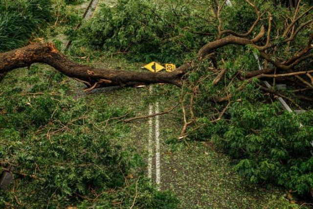 A road littered with fallen trees, signs, and leaves.