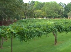 Adam's Vineyard