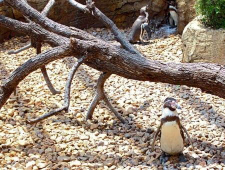 Visita a los jardines del Oceanogràfic de Valencia