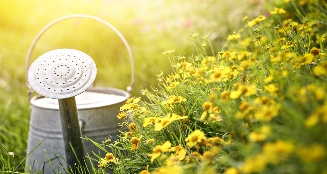 cuidar el jardín en verano
