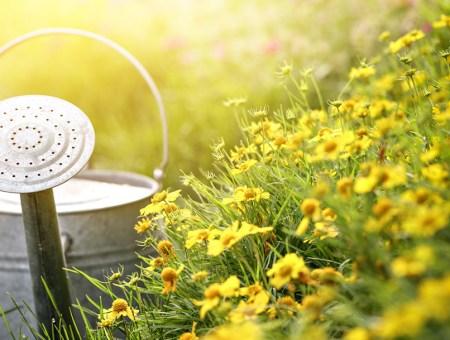 Cuidar el jardín en verano: trucos y consejos