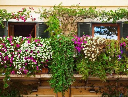 Cómo crear un jardín decorativo en macetas