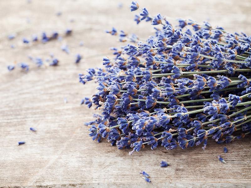 semillas de plantas aromaticas