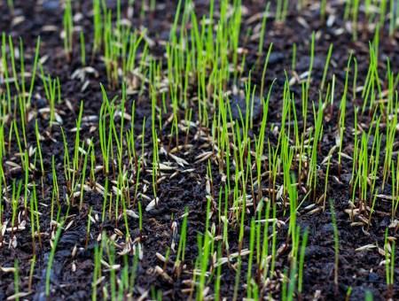 Sembrar césped natural en tu jardín: conoce las variedades