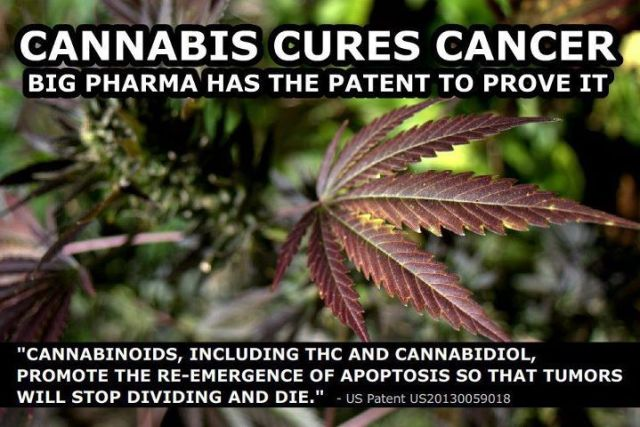 Cannabis Oil Is Gathering An Unstoppable Momentum As A World Class Healer Cannabis-cures