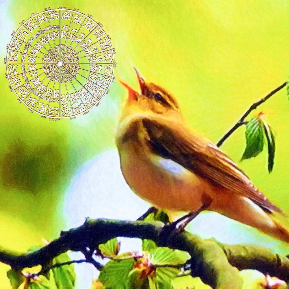 BC wt Bird