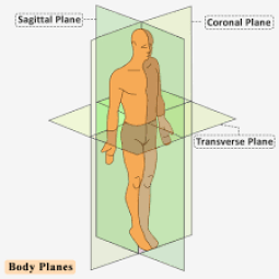 planes of the body