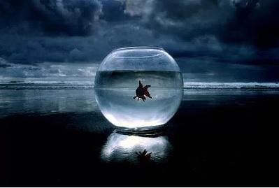 fishbowl ocean 3