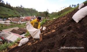 Lahan pertanian yang mengalamai erosi kerana tanpa sistem teras iring dan tanaman penyangga.