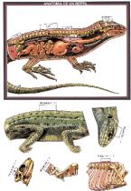 recortables_reptiles-P