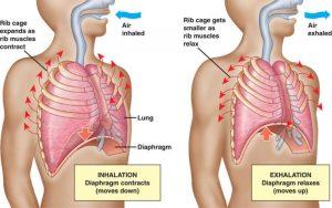 breathing-diagram-768x481