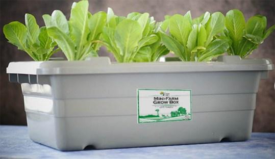 no_pump_hydroponics