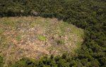 deforestacion_actualidad_ambiental