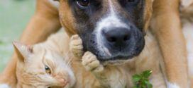 La Guardia Civil lanza campaña contra el maltrato animal