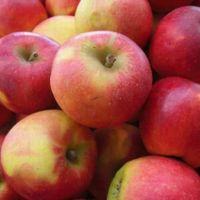 Chile: Segundo proveedor de manzanas en Centroamérica