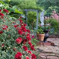 August Garden Journal