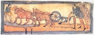 Saxon Oxen