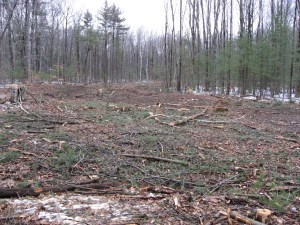 section of forest clearcut for 16-lot subdivision in Clifton Park