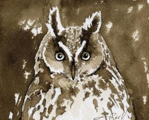 TOSLong_eared_owl