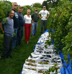 Grape Growers