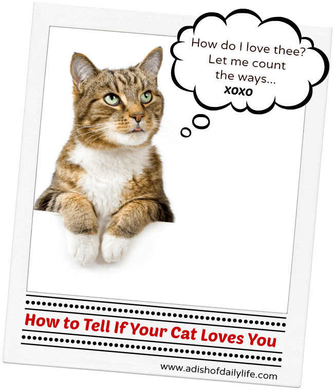 How To Tell If Your Cat Loves You