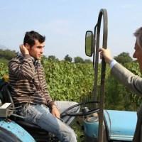 Südtirol: Weinreben von Welt und ein Vernatsch-Cup
