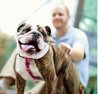 Adopt-a-Pet.com Blog If you're 55+ Purina may pay for you to adopt a pet! - Adopt-a-Pet.com Blog