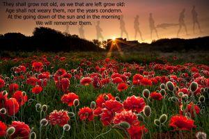 Rememberance-Poppies.jpg