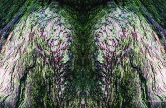 Old Wings
