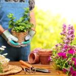 garden-getaway-stock