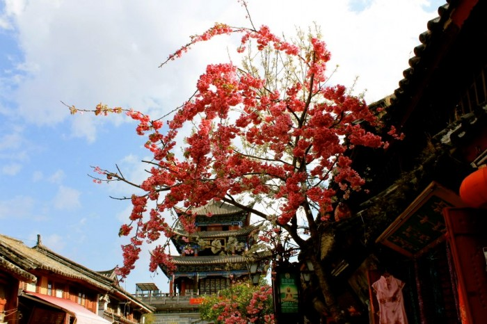 Dali Yunnan (photo by Hannah Lee)