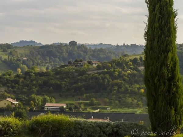 vineyard in Italy @PennySadler 2014