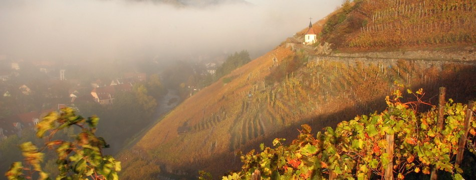 A Consumer's Guide: The Wines of Alsace, France