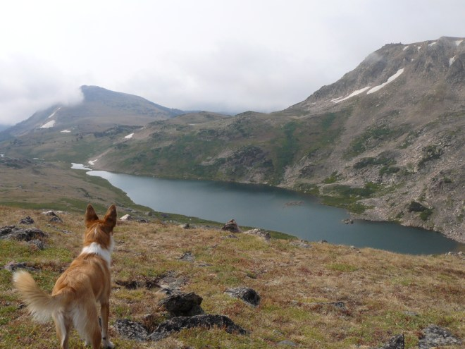 From the Beartooth Hwy overlook, Lupe surveys Gardner Lake, where she'd had such a good time running around the day before. Tibbs Butte is seen on the L.