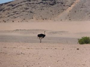 Namibia 11.13 1675