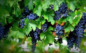 Great Garnacha! Why we're so pleased to meet you! @Snooth, @WinesofGarnacha, #GarnachaDay, #SnoothVT,  #wine