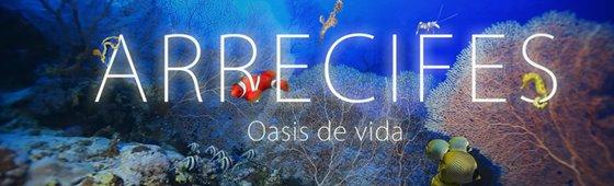 Arrecifes AECC