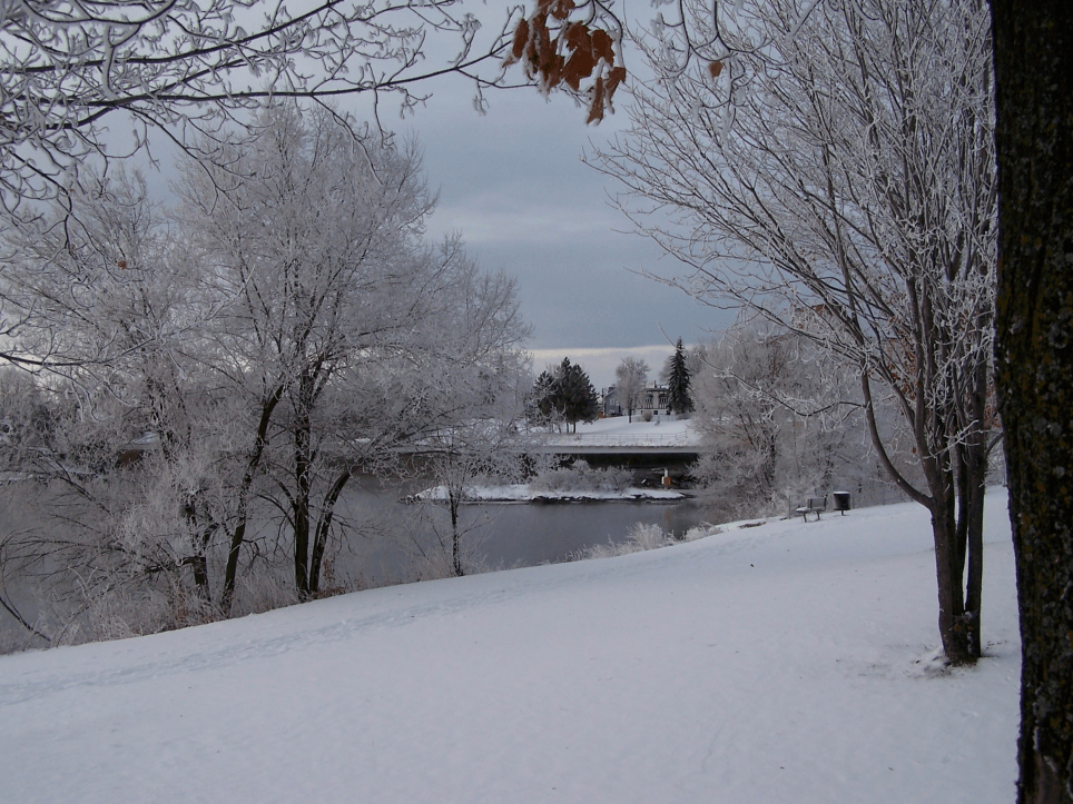Frosted Trees looking toward the weir.