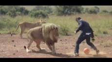 Lion richard