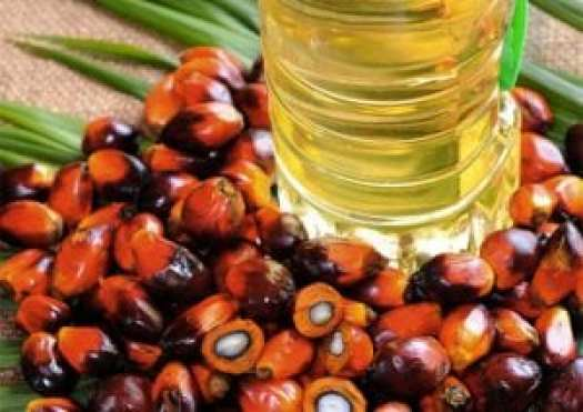 huile-palme