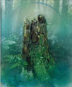 根っ株の精霊たち-緑衣