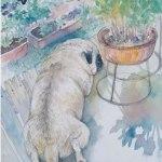 小島加奈子「nature sketchbook – COCO」(水彩8号)