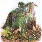 小島加奈子「森のこどもたちと(46.0×34.0cm)」