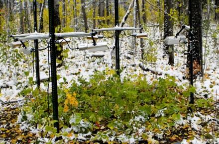 Los árboles se adaptaron al cambio de temperatura y su respiración solo aumentó un 5%./Artur Stefanski